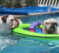 "� ""I want a turn in the raft!"" ~ ""No, I catching up on my sleep. You kept me awake all night snoring !"" �"