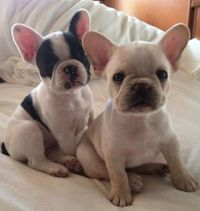 I want both of them.