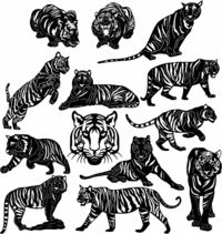 Bengal Tigers Just for: $38.90