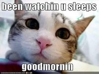 I have one of these peering at me each morning from over my head - mind the drool!