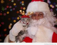 Funny Santa with a cat