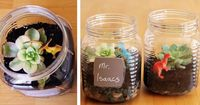 How to make a mini terrarium with your kids (Plus a great twist for turning them into cute Teacher gifts).