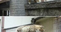 These are real cats that exist out there in the world.