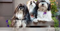 """""""Working with Dogs and Their Owners for Amazing Pet Portraits"""" good tips for shelter"""