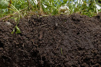How do I determine what type of soil I have in my garden?