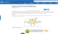 https://www.creative-enzymes.com/service/Enzyme-Covalent-Chemical-Modifications 361.html	Creative Enzymes provides reliable and flexible chemical biology solutions that cover almost every aspect you may encounter during enzyme modification. Various covale...