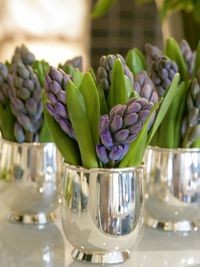 Hyacinths in silver julep cups - from Jamee Gregory's New York Parties/Private Views
