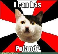 Hitler would come back as a cat