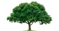 Tree Removal Madisonville - Acadian Tree Removal and Stump Services,LLC.png Acadian Tree offering free estimate on our Tree Removal, Stump Grinding / Stump Removal, Tree Trimming & Emergency Services, Tree Services in Madisonville. We always treat yo...
