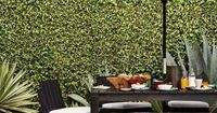 ivy wall on a California patio
