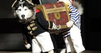 �€œIf you've seen a better picture of a #dog dressed as two pirates carrying a treasure chest today, I don't believe you.�€