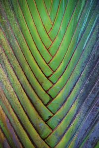 palm leaves, nature pattern and texture.