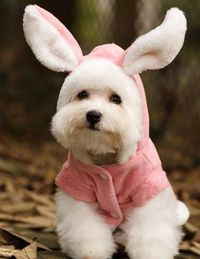 easter bunny, bunny ears and easter outfit.