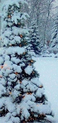 christmas trees, white christmas and winter wonderland.