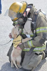Little service dog in the making..in the beginning~ ...........click here to find out more http://googydog.com