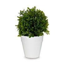 This boxwood arrangement is a great addition to your home and will bring in the new season! The green accents make this arrangement stand out with delicate beauty. It's stylish look will not only have you buying one for yourself, but one to keep in yo...