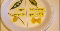 You might have seen this great idea from Somewhat Simple floating around Pinterest... We read, Butterfly House, as part of our reading series and it's a great s