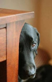 Are you still mad at me? :(( .. Click the pic for more awww