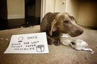 Ultimate collection of dog shaming pictures