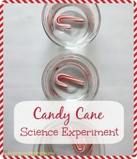 Candy Cane Science Experiment with Free Printable Data Sheet - Day 11 of our Christmas Science Advent Calendar