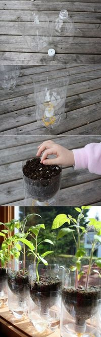 Make Your Own Self Watering Containers- a fun project for the kids