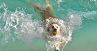 Pup in the Caribbean ~Debbie Orcutt �