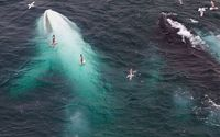 An extremely rare white humpback whale was spotted recently near Norway. Welsh maritime engineer Dan Fisher made the startling discovery off the coast of Norway in August.