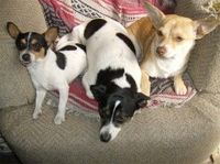 What Makes You Happy?  My dogs Bandit, Kali, and RockStar. Clarissa, New Port Richey, FL
