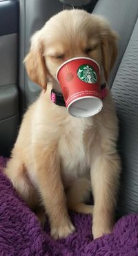 """If you ask for a """"puppuccino"""" at Starbucks, they will give you a cup of whipped cream for your dog!"""