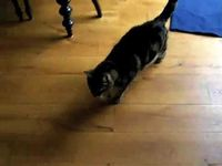 (VIDEO) Have you ever wondered what it would be like if cats could talk?