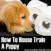 � This is a great short video tutorial, with tons of useful information on the essential task of potty training your dog! �