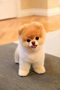 I can't handle the cuteness!