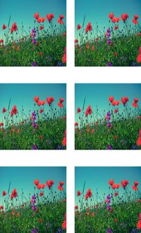 Fabric Panel Red Flowers in a Field 6 pictures on 1 Panel. Flowers Poly Quilt Fabric Crafts Quilts, Quilters, Patchwork, Sewing Quilting $10.95