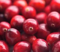 Cranberry Supplement and Nutrients
