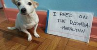 The 35 Naughtiest Dogs On The Planet. You'll Laugh So Hard When You See What They Did! | News-Hound
