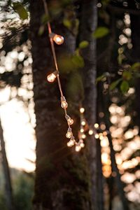al fresco delight! love the ambience this lighting gives off at weddings & parties! Photography by laurenbphoto.com