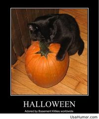 usa humor, funny halloween pics, funny pictures, funny halloween 2014,  funny pictures sayings, funny hd sayings, funny 2015,  funny sayings and quotes, funny pictures hd, funny kids