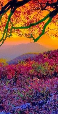 Stunning Views: Autumn at Shenandoah National Park in the Blue Ridge Mountains of Virginia