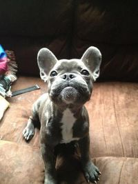 Thispostwas discovered by Hanna Elesky. Discover (and save!) your own Pins on Pinterest. | See more about french bulldogs and bulldogs.