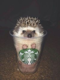 """I am not motivational speaker. I am hedgehog."""