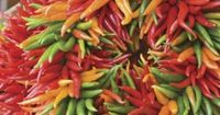 Chile Weather   Spice up your decor with wreaths made out of bright, ornamental chiles. Use a single color of chiles for a more modern, monochromatic look, or mix up the colors for added drama.   SouthernLiving.com