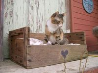 cat beds, pet beds and wood crates.