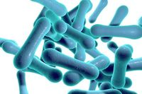 Asymptomatic Carriers of Diphtheria Identified in Canadian School
