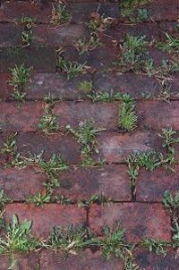 Baking soda neutralizes the ph in the soil and nothing will grow there. use baking soda around all of the edges of flower beds to keep the grass and weeds from growing into beds. Just sprinkle it onto the soil so that it covers it lightly. Do this twice a...