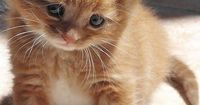 cat �™�.......this cute kitty looks full of love!!
