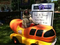 This is the happiest day of Mr. Pug's life