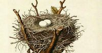 Nest from The Illustrations of the Nests and Eggs of Birds of Ohio by Genevieve Jones -- (idea for custom needlepoint canvas)