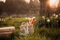 Rustic Easter Photo Digital Photo Backdrop, Rustic basket, Easter Bunny, Carrots. in sunset field of daffodils Spring Photoshop Background $7.99