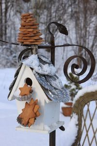 Winter -- cookies for the birds!